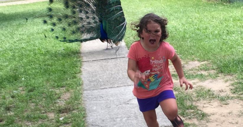 Girl runs away from a peacock