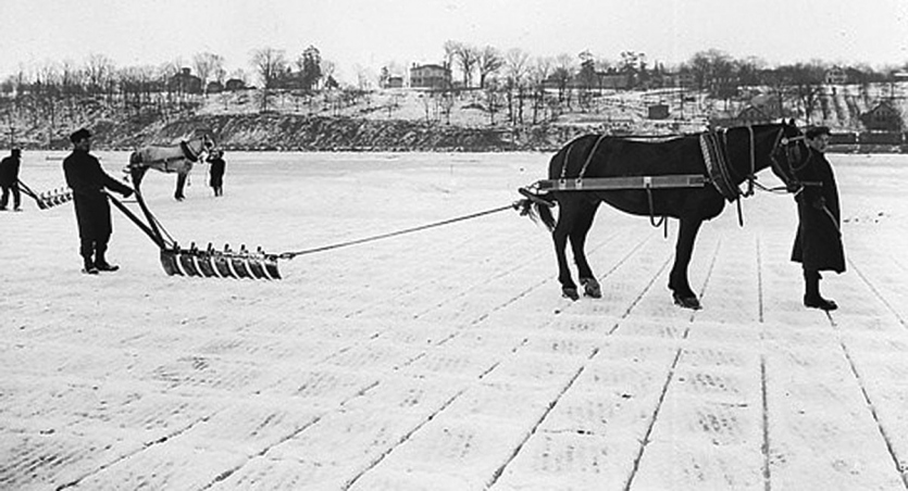 Horse-drawn scrapers on the ice